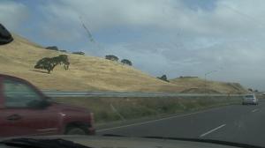 Rolling hills II